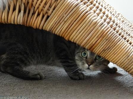 Кот прячется под креслом