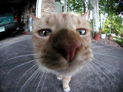 Кот учуял запах чужой собаки