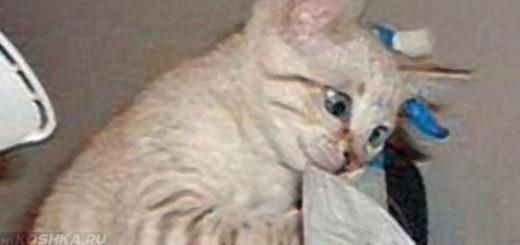 Кот своими лапами борется с насморком
