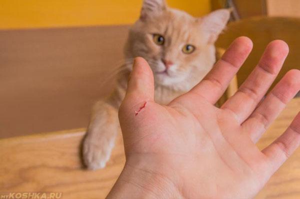 Кот поцарапал руку хозяина до крови