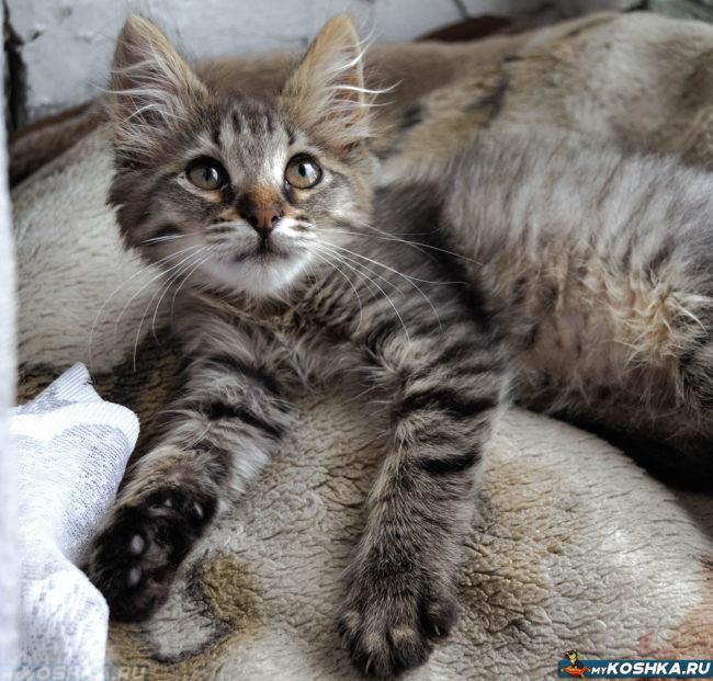 Котёнок лежит и выпустил коготочки