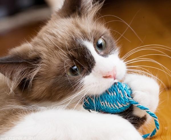 Котёнок грызут мышь молочными зубами