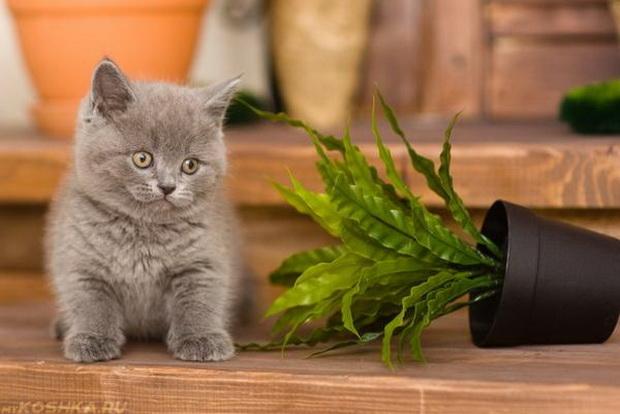 Маленький котик и упавшее растение