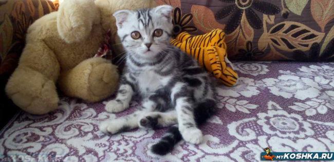 Котёнок 4 месяца выкормленный без кошки