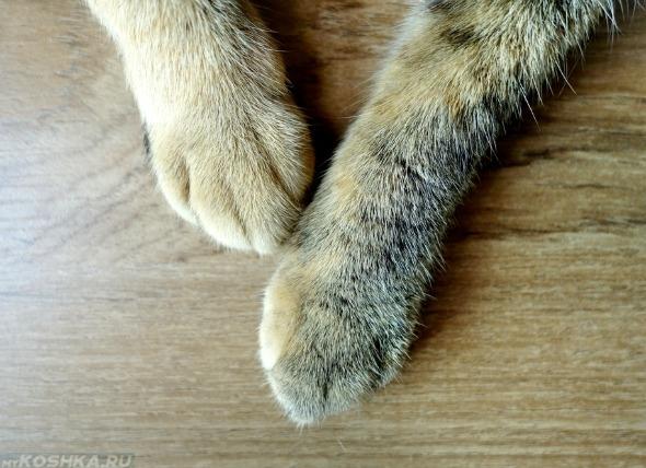 Опухает лапа с переломом у кошки