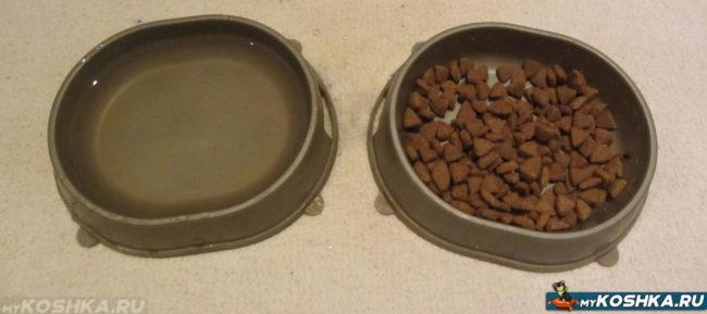 Полные кошачьи миски с водой и едой