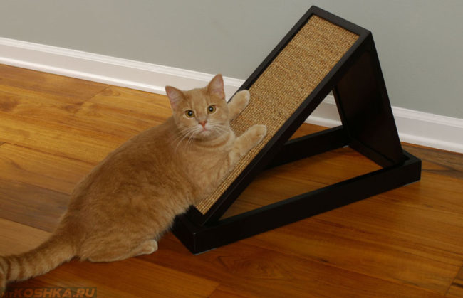 Кошка точит когти от напольную царапку