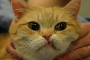 Не правильный прикус у кошки