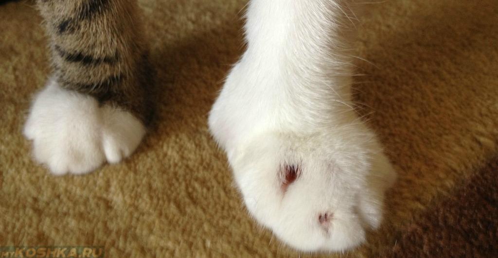 определитесь: нужно у кота сильный ушиб лапы может