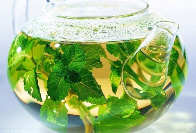 Травяной настой из мяты в стеклянном чайнике