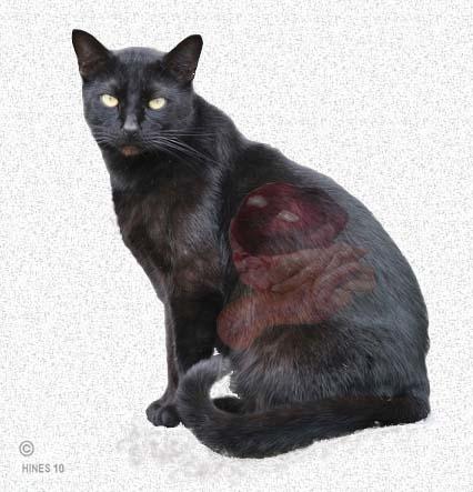 Кошка и панкреатит на схеме