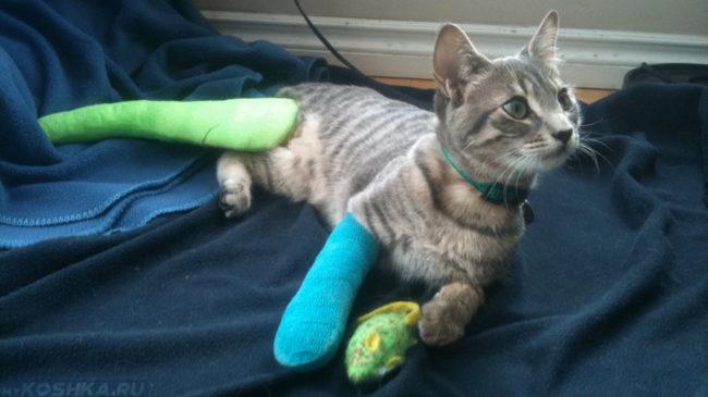 Кошка с двумя переломанными лапами в гипсе