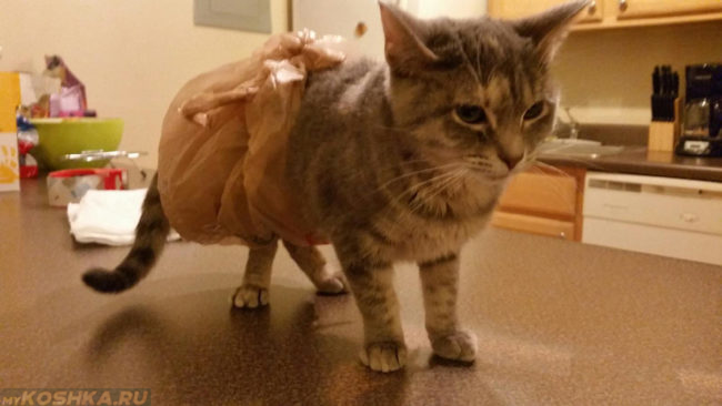 Кошка при диарее в подгузнике