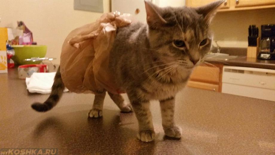 Понос у кошки причины и лечение в домашних условиях 110