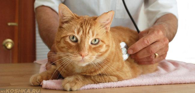 Проверка работы сердца у кошки