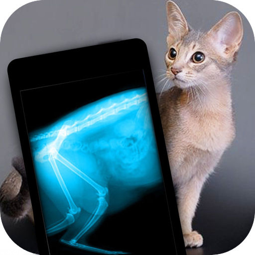 Снимок рентгена у кота