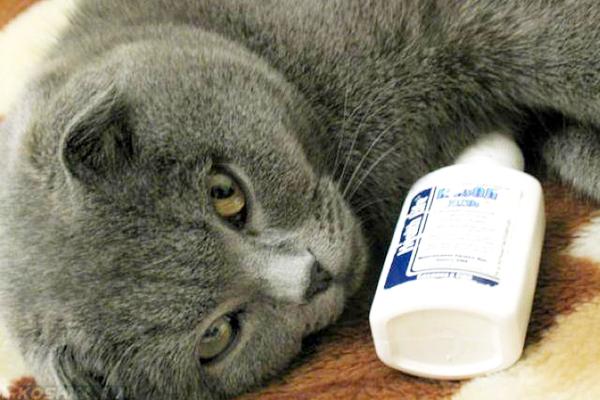 Серый кот лежит рядом с каплями для носа