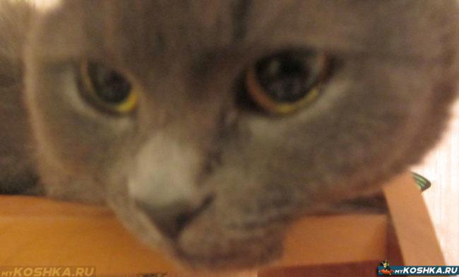 Перед осмотром ротовой полости у кота