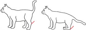 Мочеиспускание у кошки больной сахарным диабетом