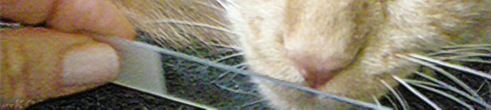 Ветеринар берёт соскоб с носа кошки с насморком