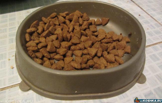 Сухой корм для кошки в миске с едой