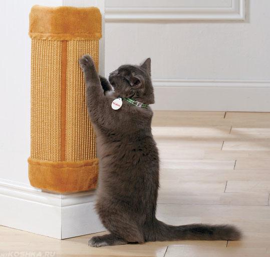 Кошка точит когти об угловую царапку