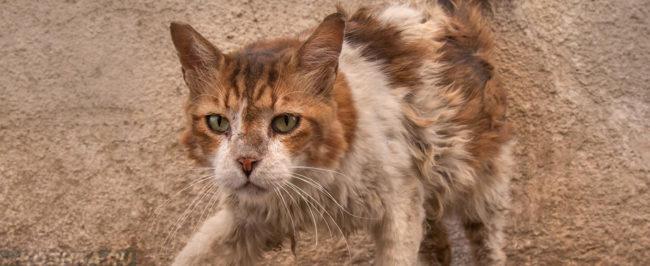 Уличный грязный кот