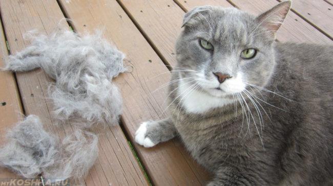 У кошки выпадает шерсть комками
