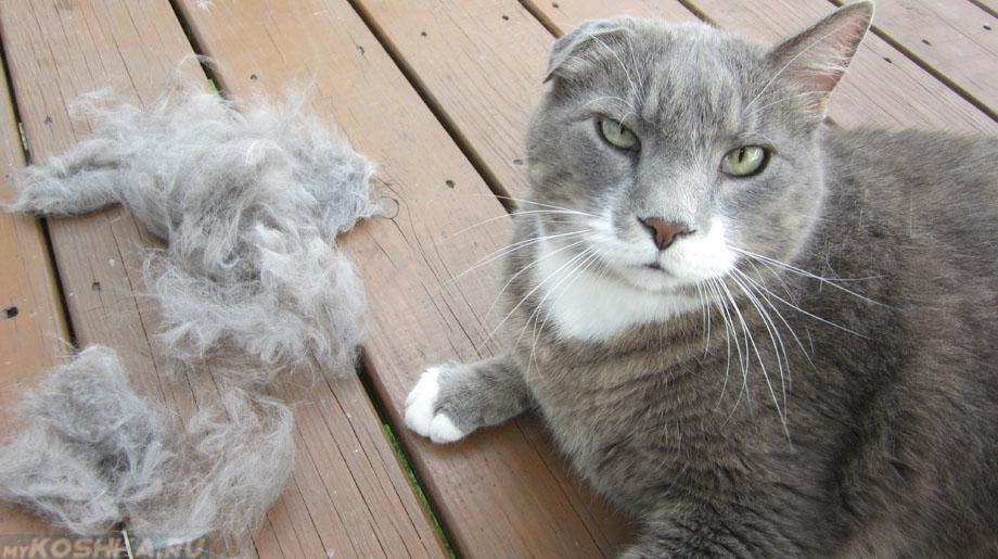 паразиты в коже кота