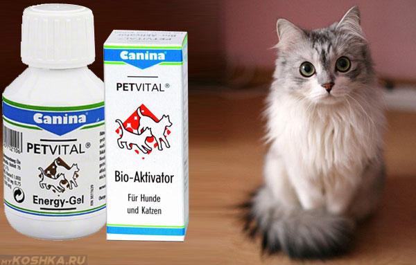 Коробка с витаминами возле кота