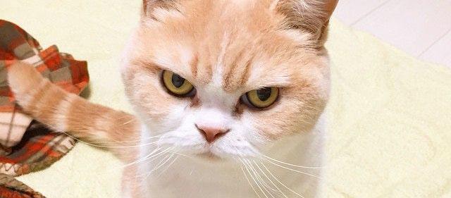 Злой кот готовится к атаке на хозяина