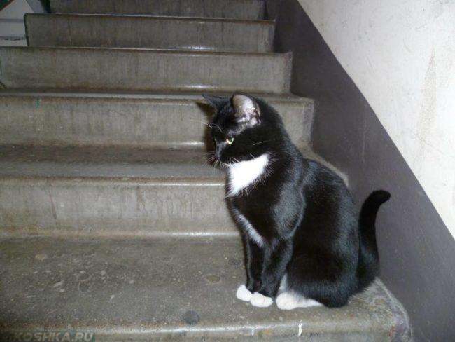 Чёрная кошка сбежала в подъезд