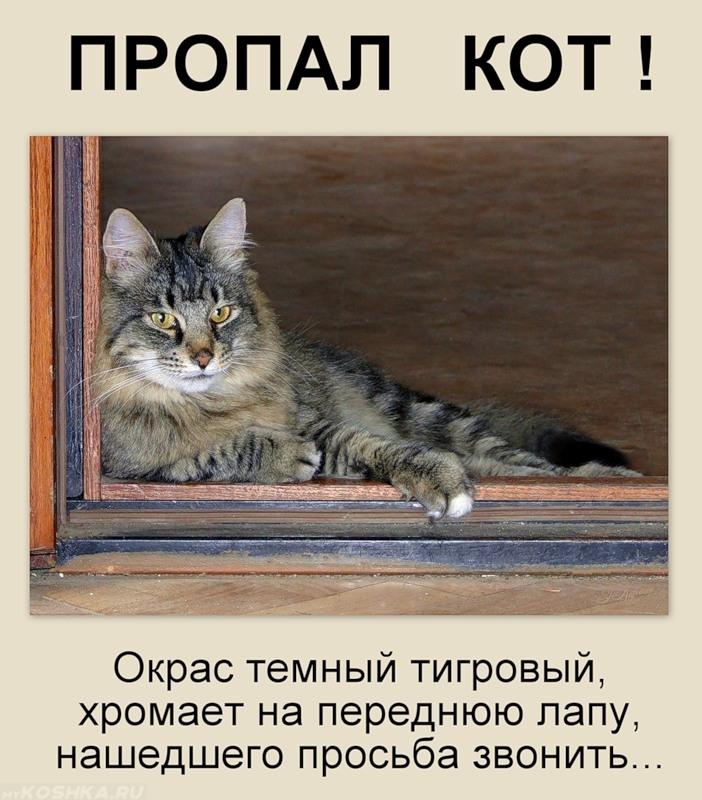 Подать объявление пропал кот барахла.нет частные объявления о продаже авто в пензе