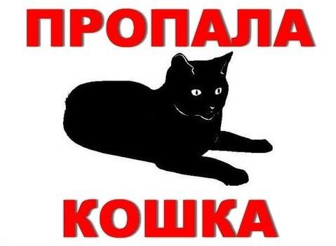 Пропала черная кошка