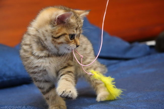 Котик играет со специальной игрушкой