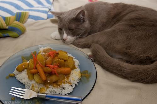 Серая кошка отказывается от еды на тарелке