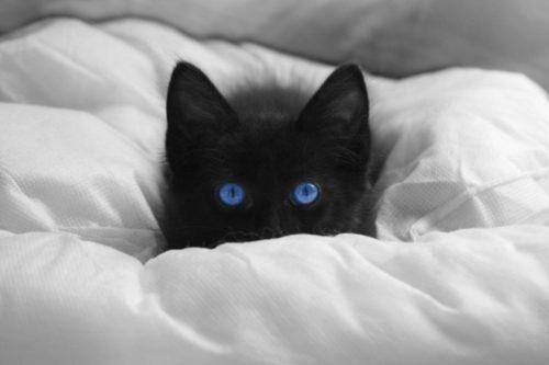 Черный пушистый котенок с голубыми глазами на белом одеяле