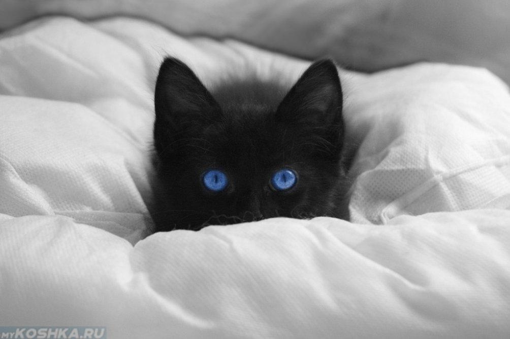 показывает картинки с черными кошками с голубыми формой