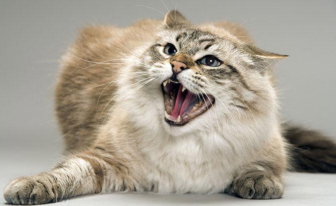 Почему кот кидается только на одного человека