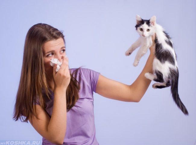 Аллергия у девушки на пушистого черного с белым котенка