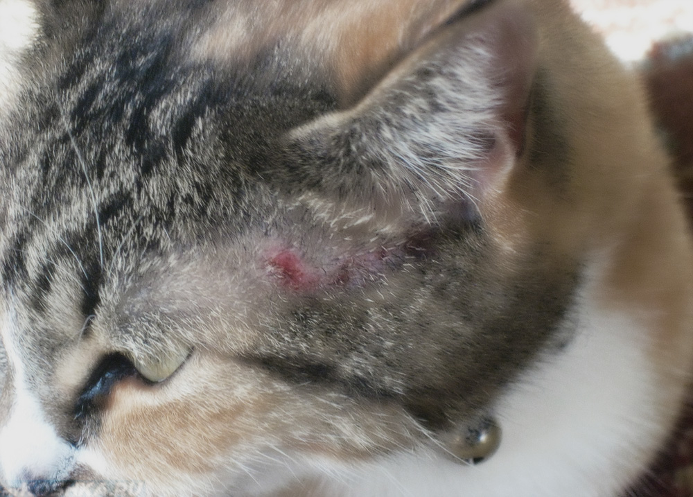 аллергия на кошачью слюну
