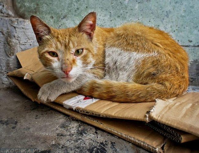 Бездомный худой рыжий кот на коробке