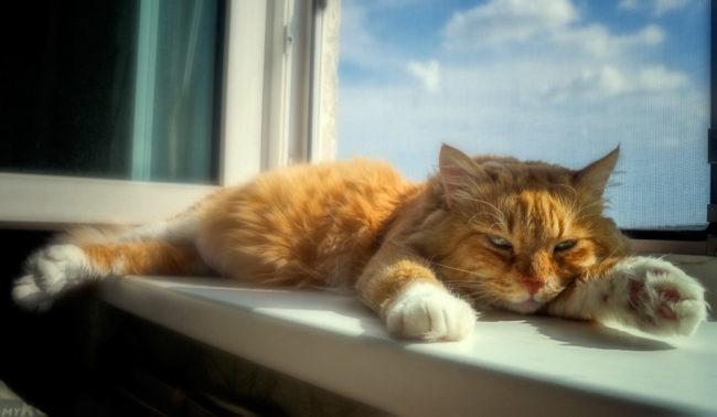 Рыжий кот лежит на подоконнике