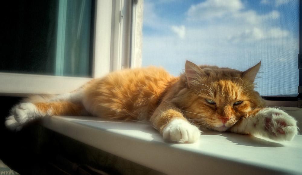 Чужой кот на подоконнике