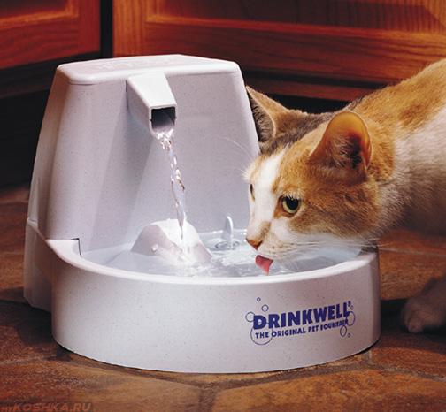 Рыжий кот пьёт воду из фонтана