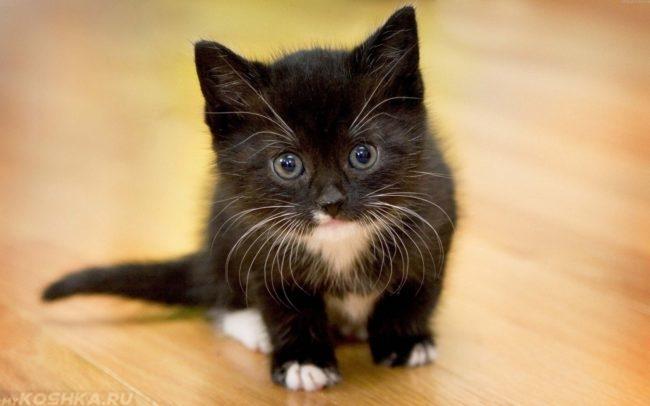 черный котенок с белыми усами