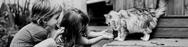 Дети играются с кошкой
