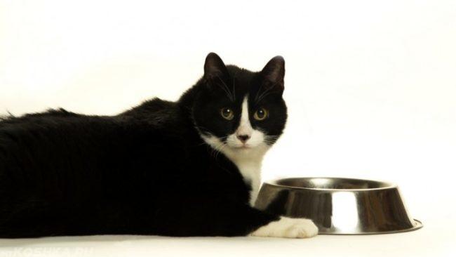 Черный с белым кот и пустая миска на белом фоне