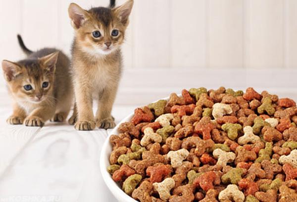 Котята смотрят на миску с кормом