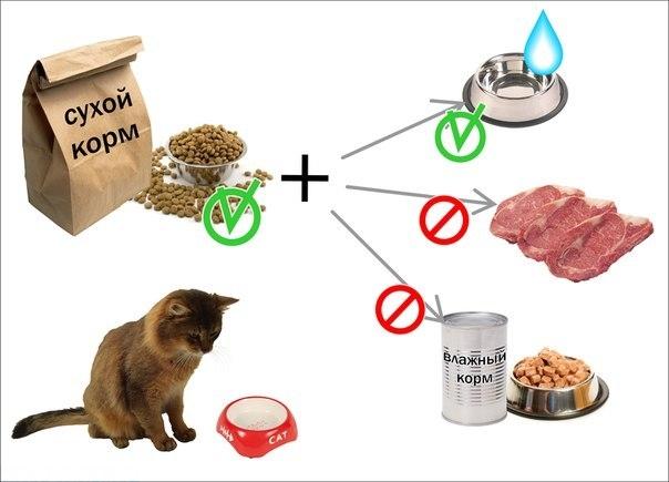 Кот выбирает рацион среди разных сортов корма